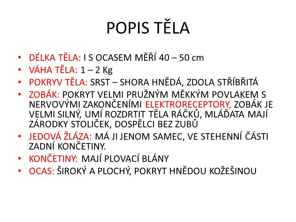 POPIS TĚLA DÉLKA TĚLA: I S OCASEM MĚŘÍ 40 – 50 cm VÁHA TĚLA: 1 – 2 Kg