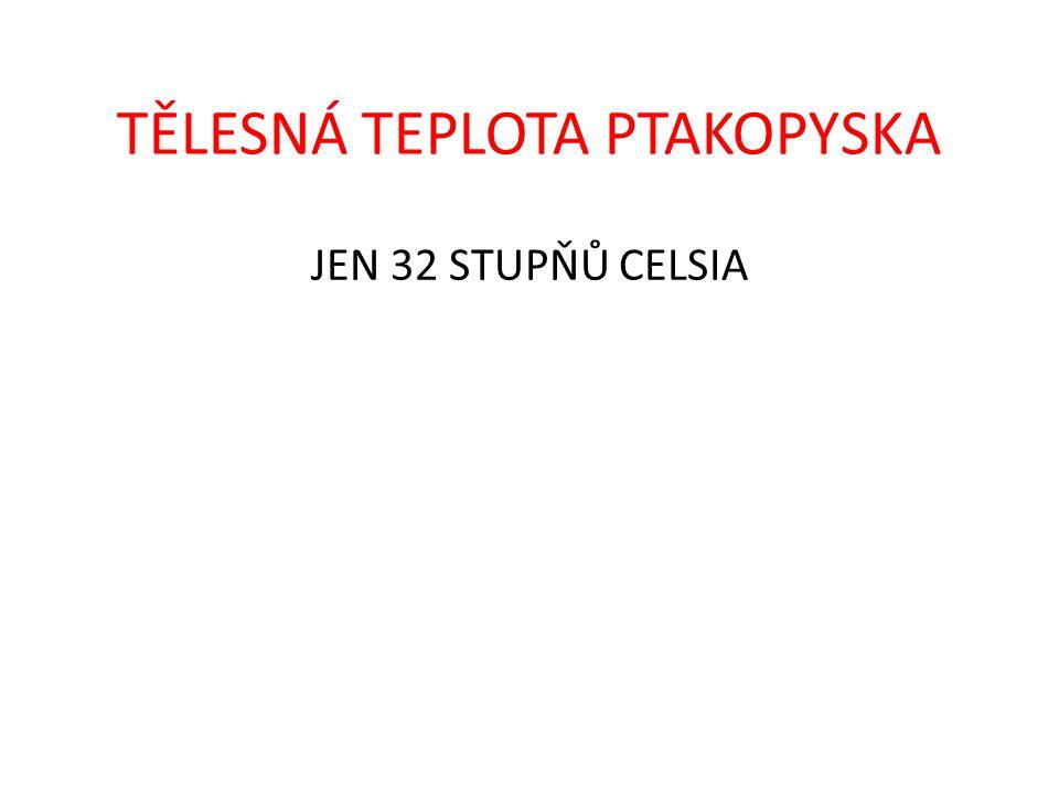 TĚLESNÁ TEPLOTA PTAKOPYSKA