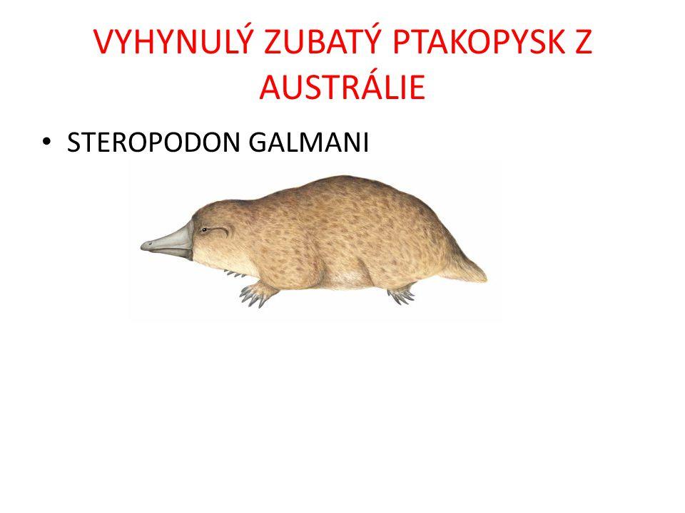VYHYNULÝ ZUBATÝ PTAKOPYSK Z AUSTRÁLIE