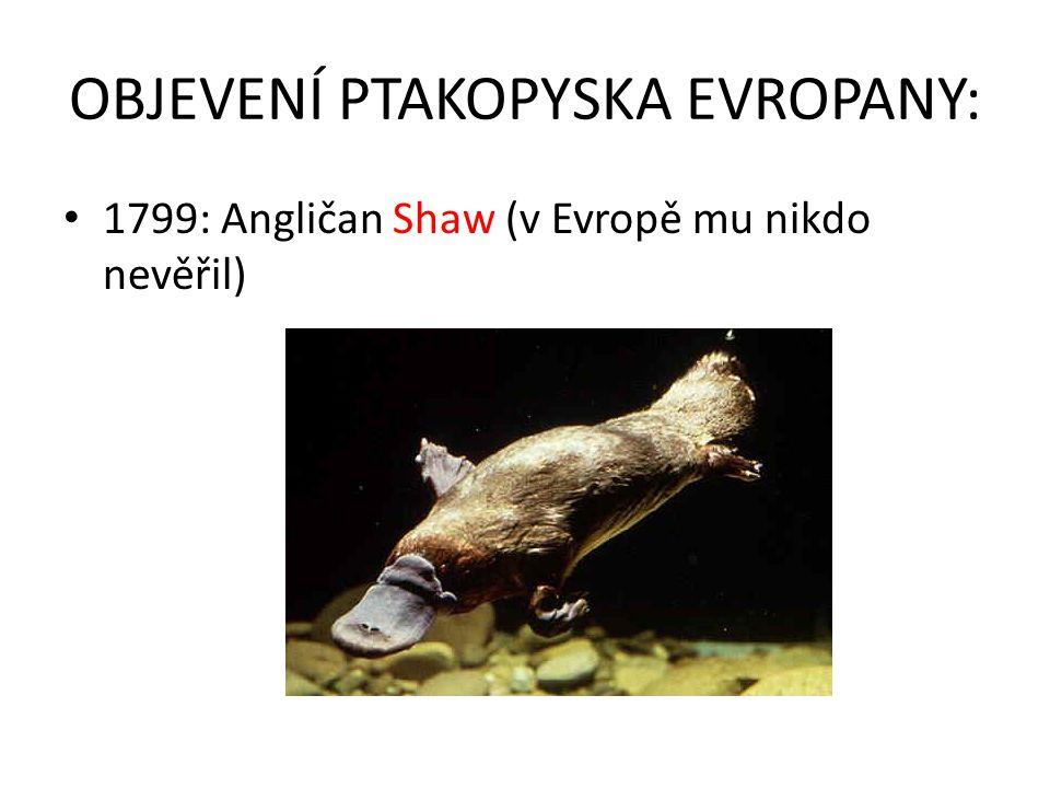 OBJEVENÍ PTAKOPYSKA EVROPANY: