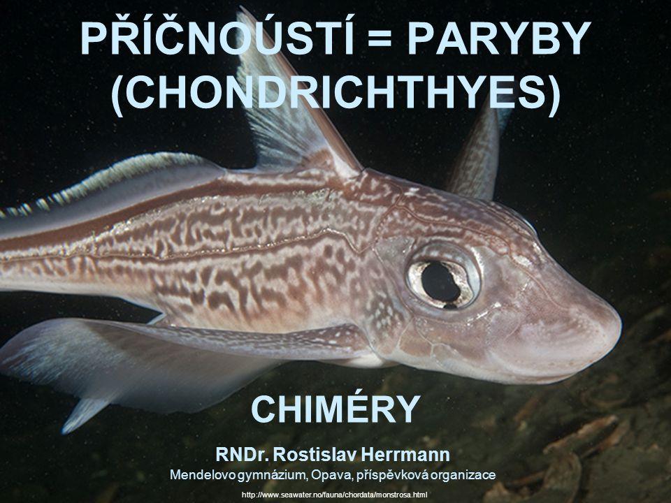 PŘÍČNOÚSTÍ = PARYBY (CHONDRICHTHYES) CHIMÉRY
