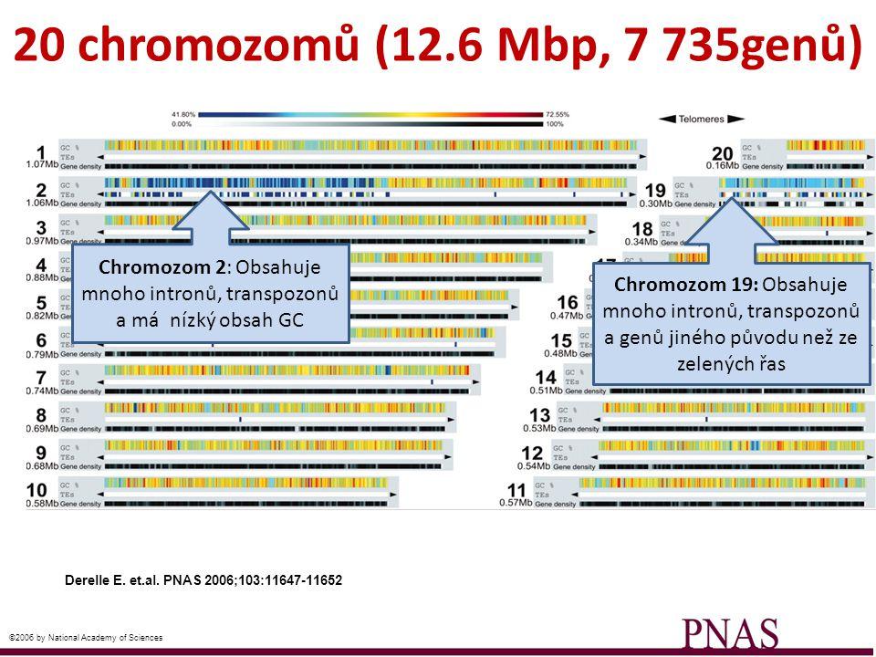 Chromozom 2: Obsahuje mnoho intronů, transpozonů a má nízký obsah GC