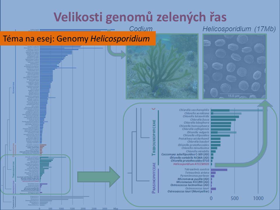 Velikosti genomů zelených řas