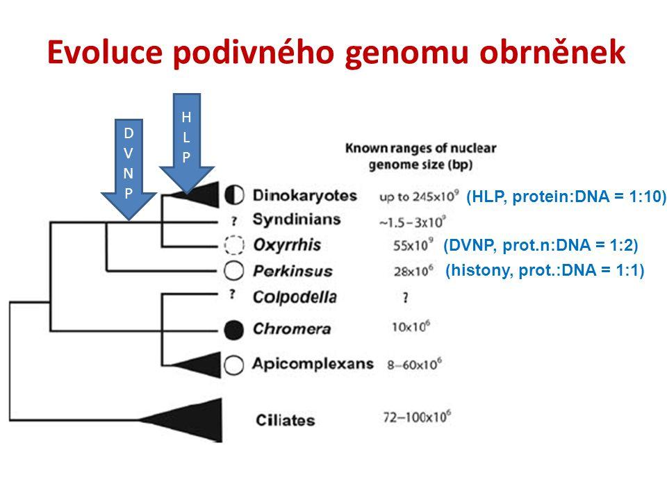 Evoluce podivného genomu obrněnek