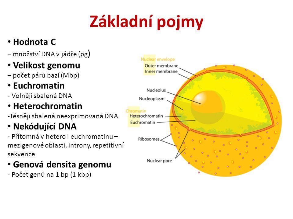 Základní pojmy Hodnota C – množství DNA v jádře (pg) Velikost genomu