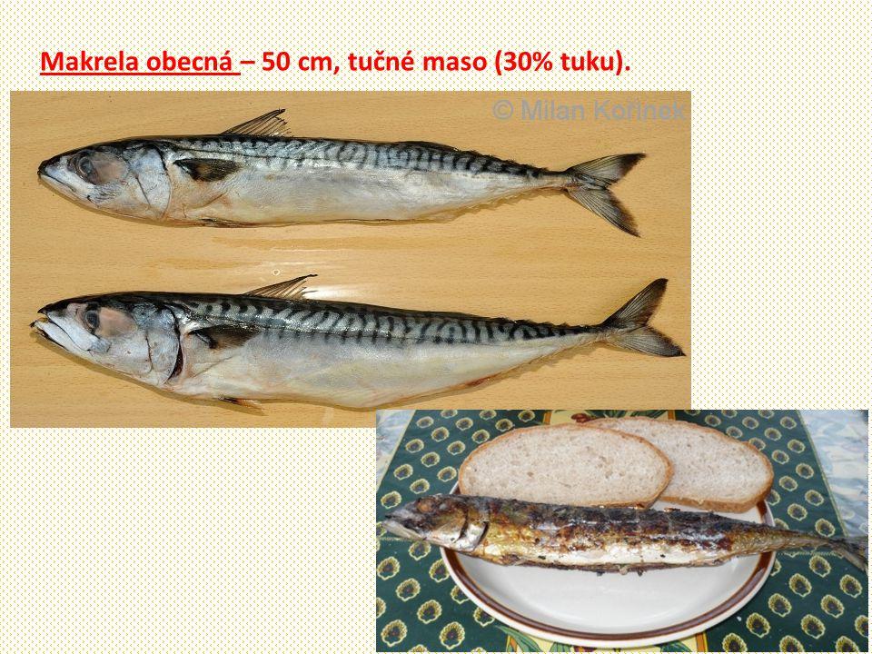 Makrela obecná – 50 cm, tučné maso (30% tuku).