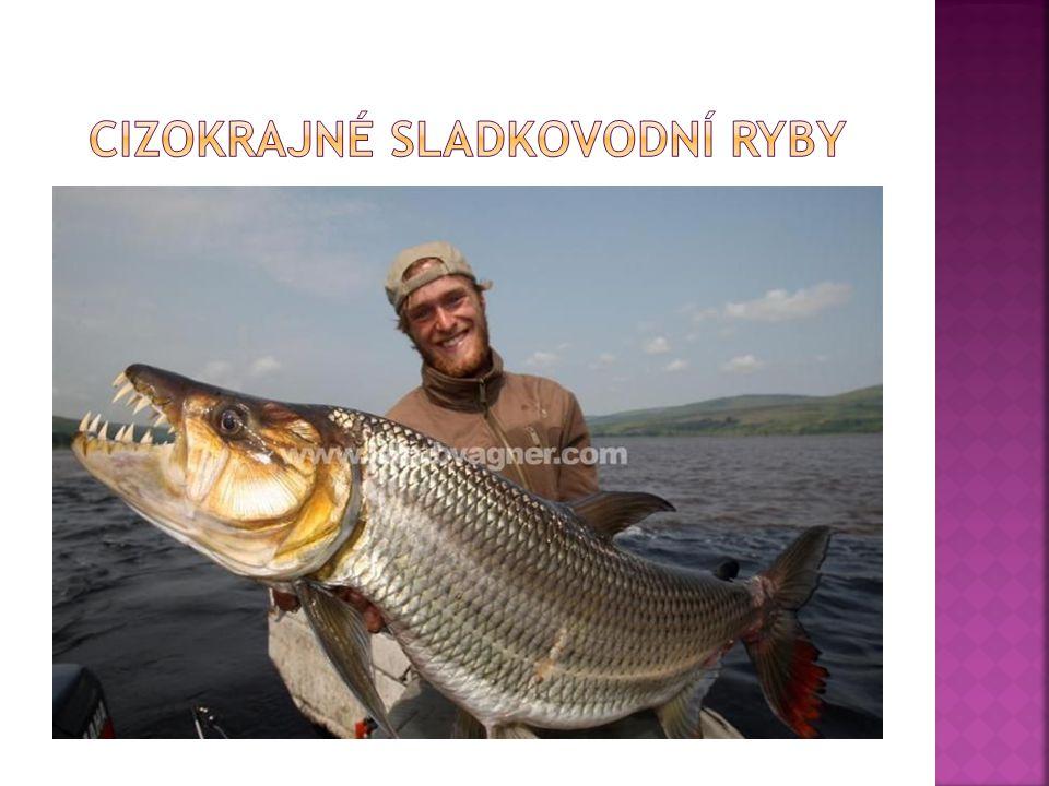 Cizokrajné sladkovodní ryby