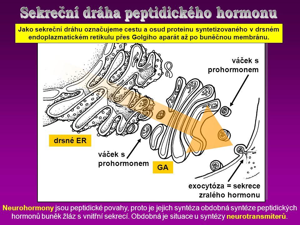 Sekreční dráha peptidického hormonu