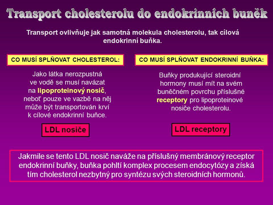 Transport cholesterolu do endokrinních buněk