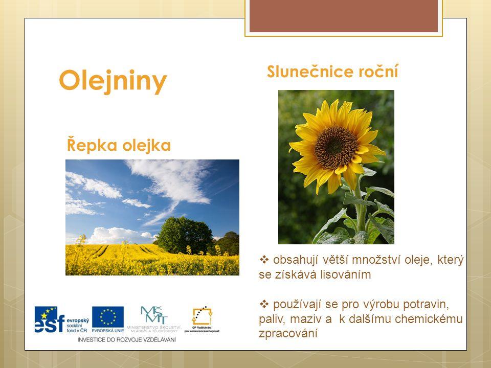 Olejniny Slunečnice roční Řepka olejka