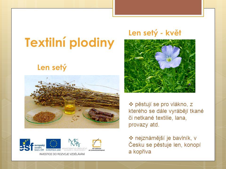 Textilní plodiny Len setý - květ Len setý