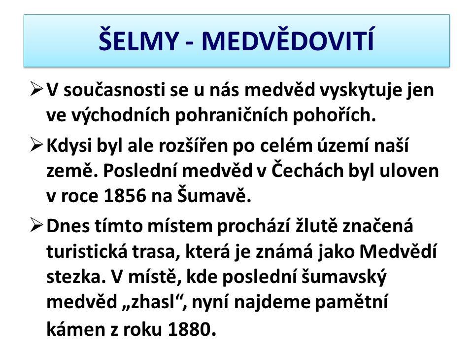 ŠELMY - MEDVĚDOVITÍ V současnosti se u nás medvěd vyskytuje jen ve východních pohraničních pohořích.