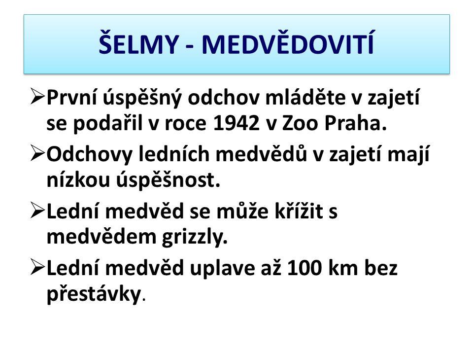 ŠELMY - MEDVĚDOVITÍ První úspěšný odchov mláděte v zajetí se podařil v roce 1942 v Zoo Praha.