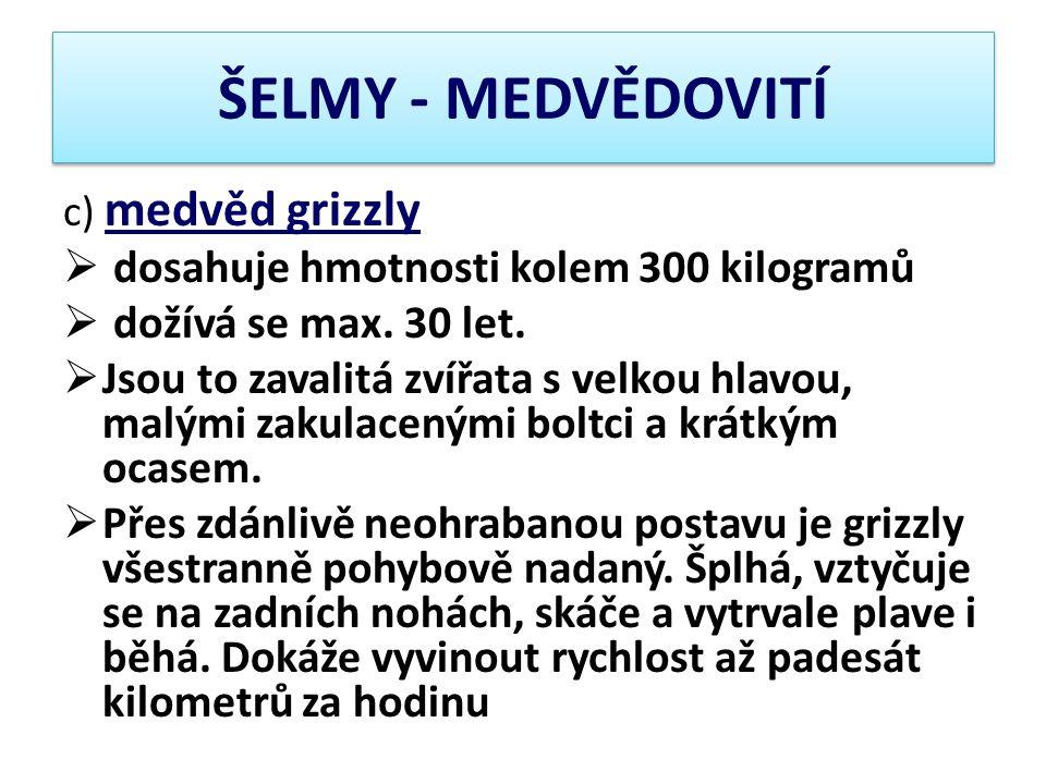 ŠELMY - MEDVĚDOVITÍ dosahuje hmotnosti kolem 300 kilogramů