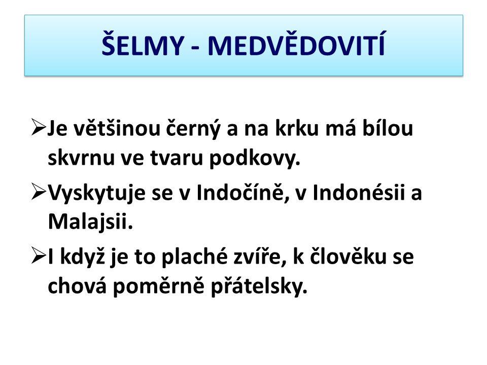 ŠELMY - MEDVĚDOVITÍ Je většinou černý a na krku má bílou skvrnu ve tvaru podkovy. Vyskytuje se v Indočíně, v Indonésii a Malajsii.