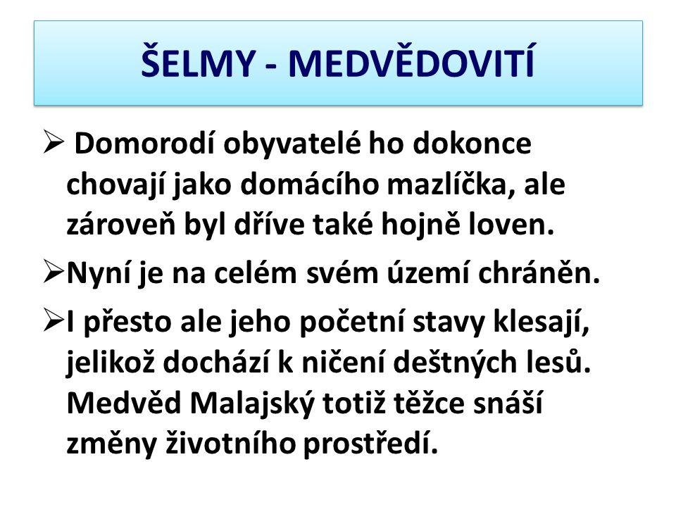 ŠELMY - MEDVĚDOVITÍ Domorodí obyvatelé ho dokonce chovají jako domácího mazlíčka, ale zároveň byl dříve také hojně loven.