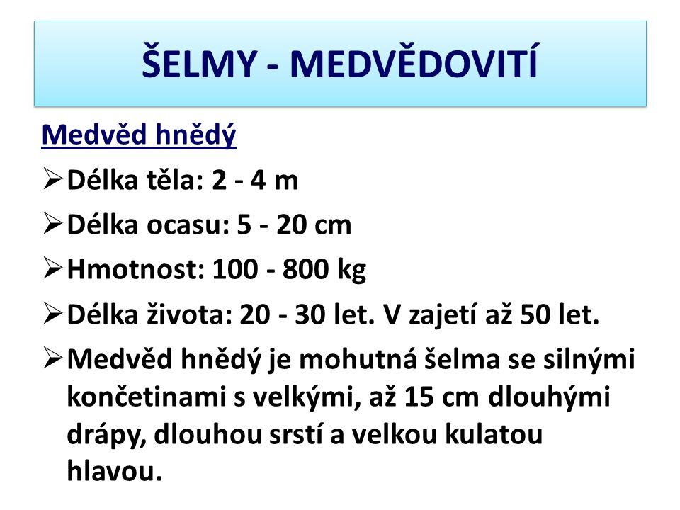 ŠELMY - MEDVĚDOVITÍ Medvěd hnědý Délka těla: 2 - 4 m