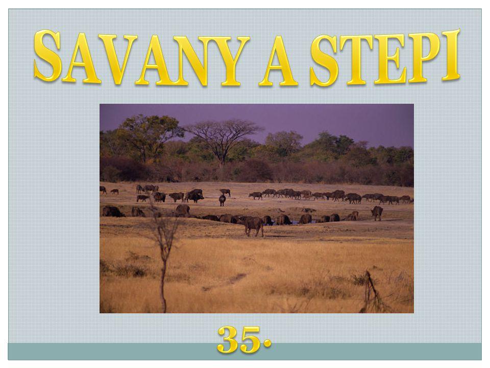SAVANY A STEPI 35.