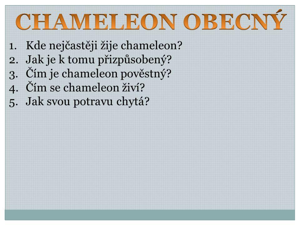 CHAMELEON OBECNÝ Kde nejčastěji žije chameleon