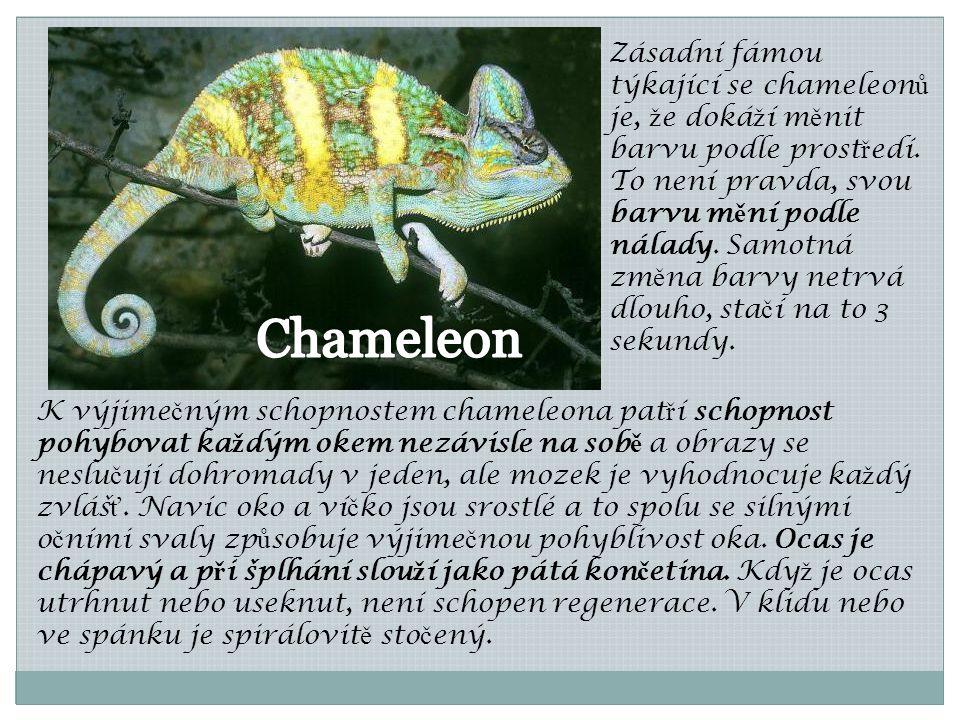 Zásadní fámou týkající se chameleonů je, že dokáží měnit barvu podle prostředí. To není pravda, svou barvu mění podle nálady. Samotná změna barvy netrvá dlouho, stačí na to 3 sekundy.