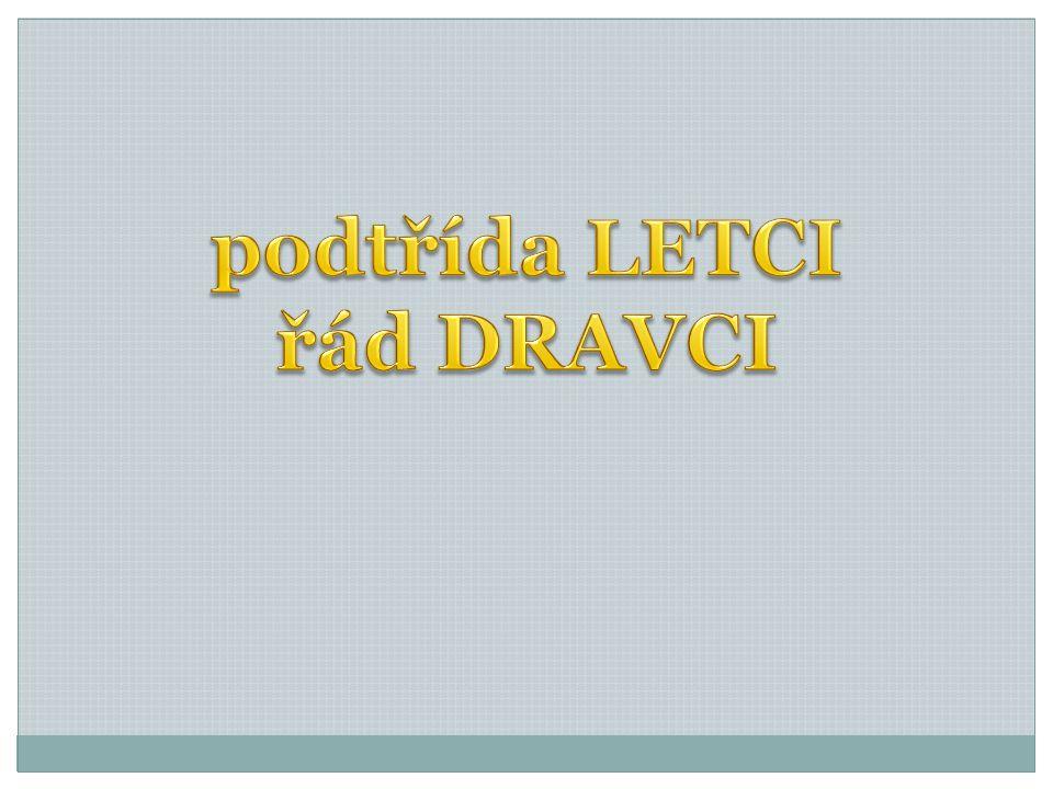 podtřída LETCI řád DRAVCI