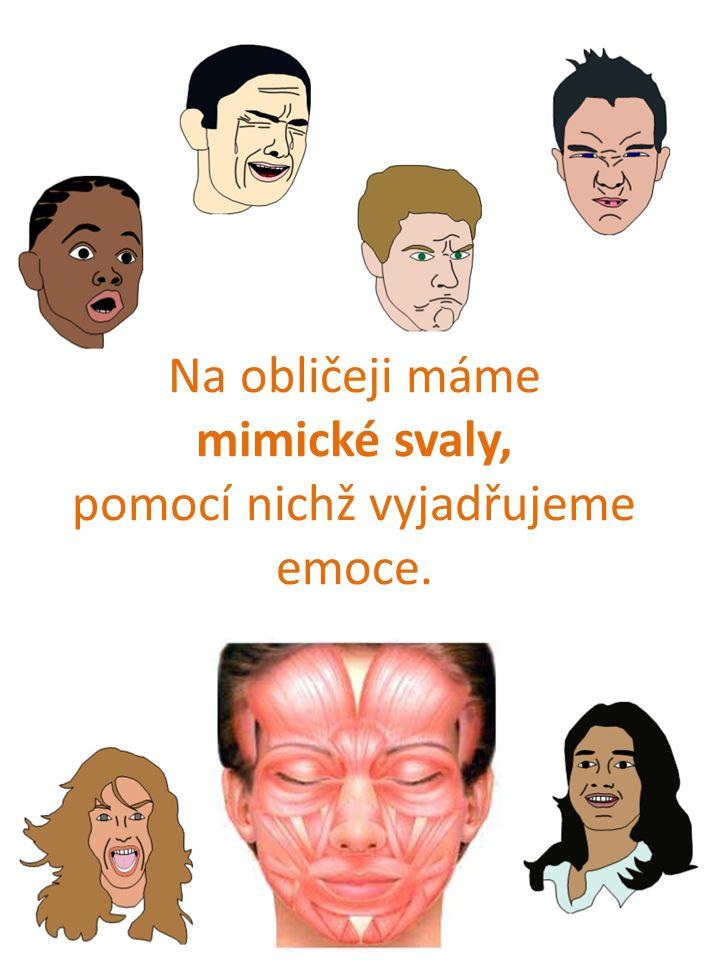 Na obličeji máme mimické svaly, pomocí nichž vyjadřujeme emoce.