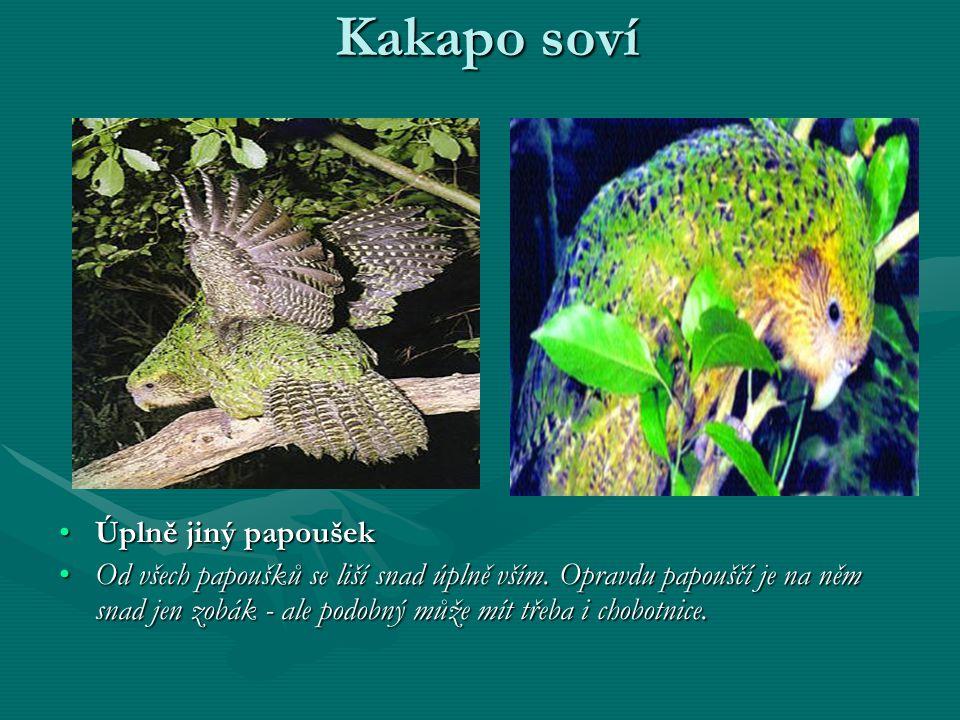 Kakapo soví Úplně jiný papoušek