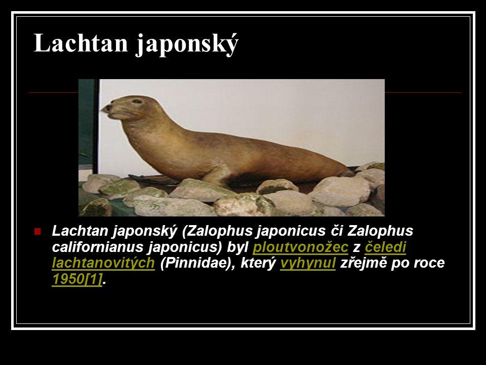 Lachtan japonský
