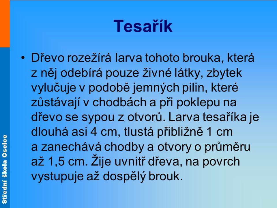 Tesařík