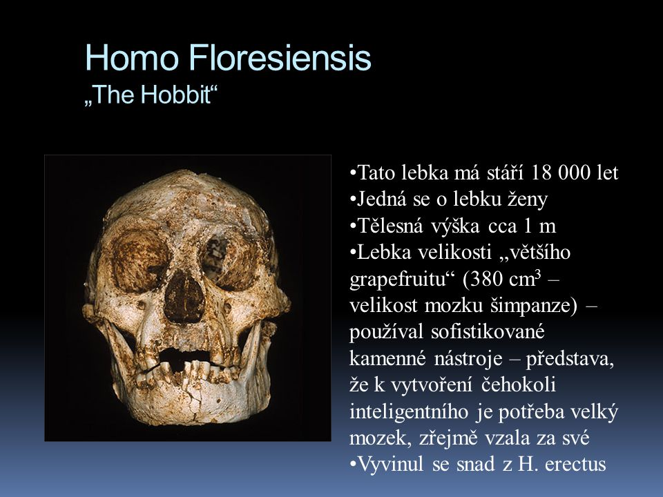 "Homo Floresiensis ""The Hobbit"