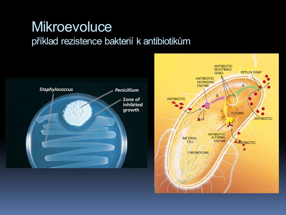 Mikroevoluce příklad rezistence bakterií k antibiotikům