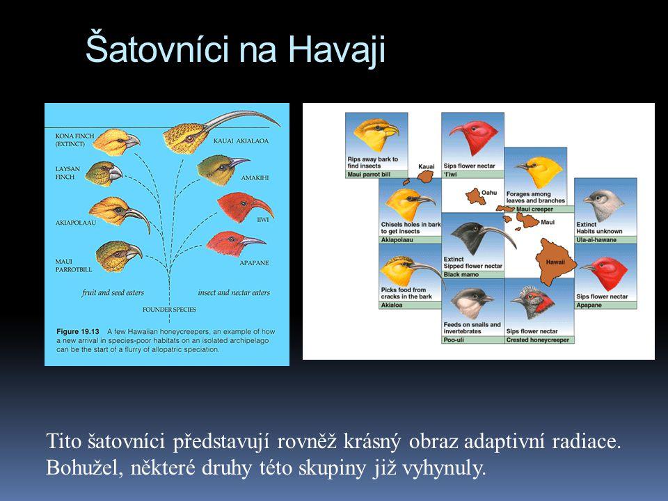 Šatovníci na Havaji Tito šatovníci představují rovněž krásný obraz adaptivní radiace.