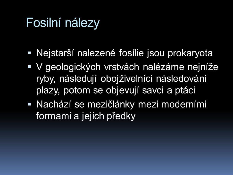 Fosilní nálezy Nejstarší nalezené fosílie jsou prokaryota
