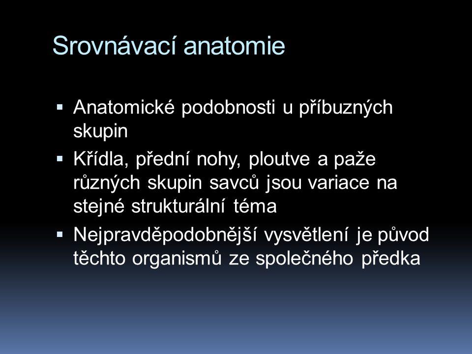 Srovnávací anatomie Anatomické podobnosti u příbuzných skupin