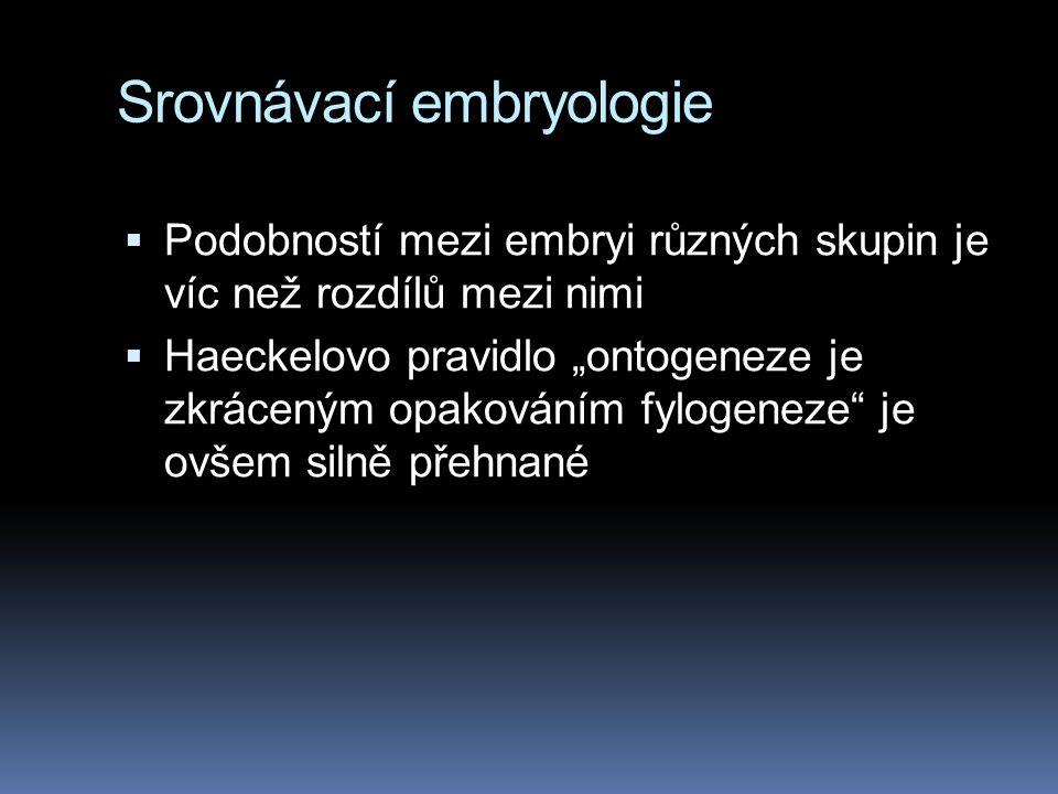 Srovnávací embryologie