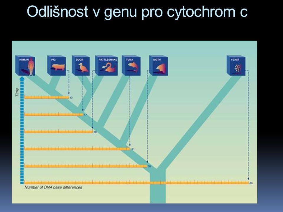 Odlišnost v genu pro cytochrom c