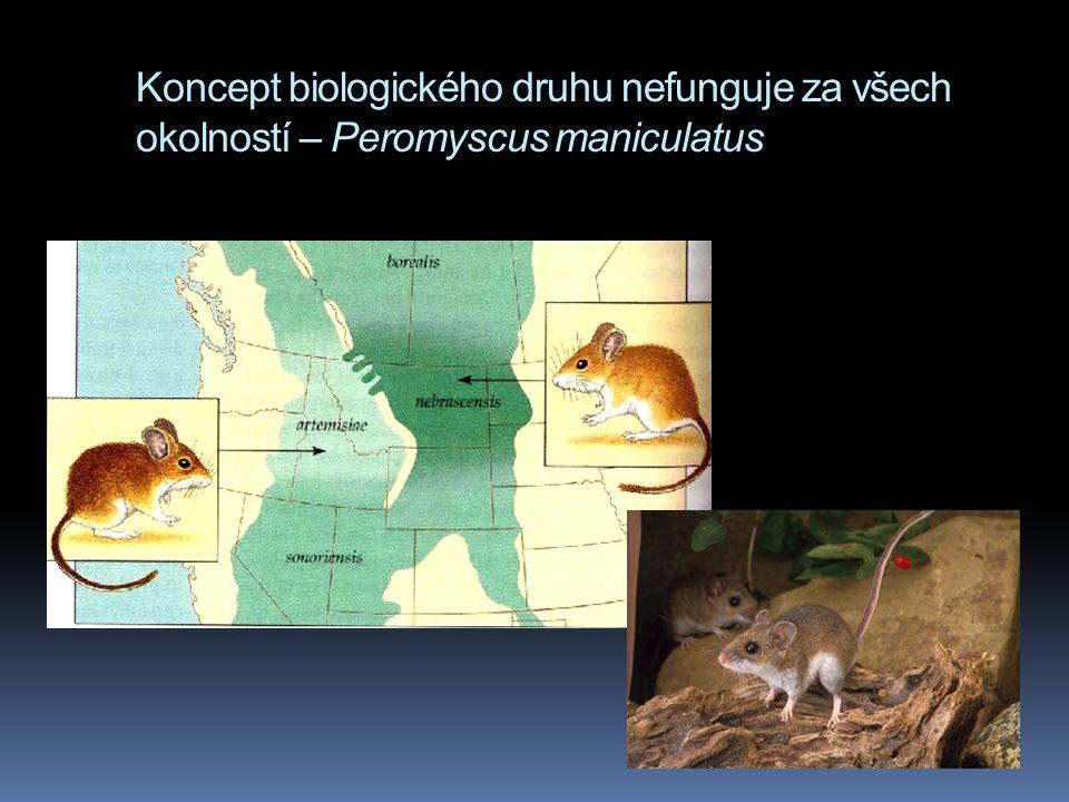 Koncept biologického druhu nefunguje za všech okolností – Peromyscus maniculatus