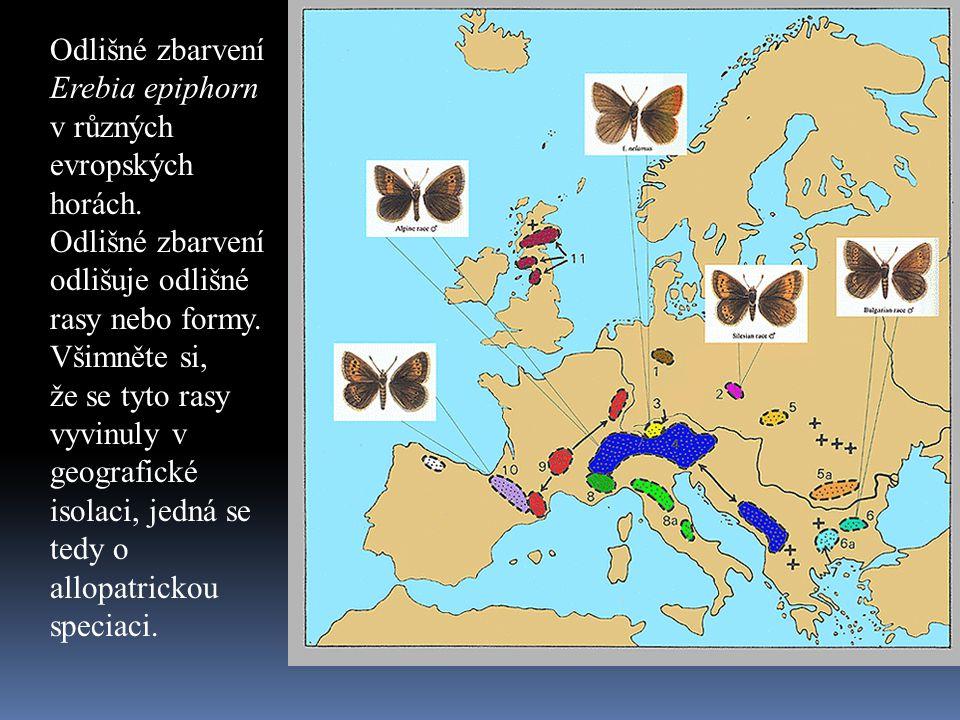 Odlišné zbarvení Erebia epiphorn v různých evropských horách.