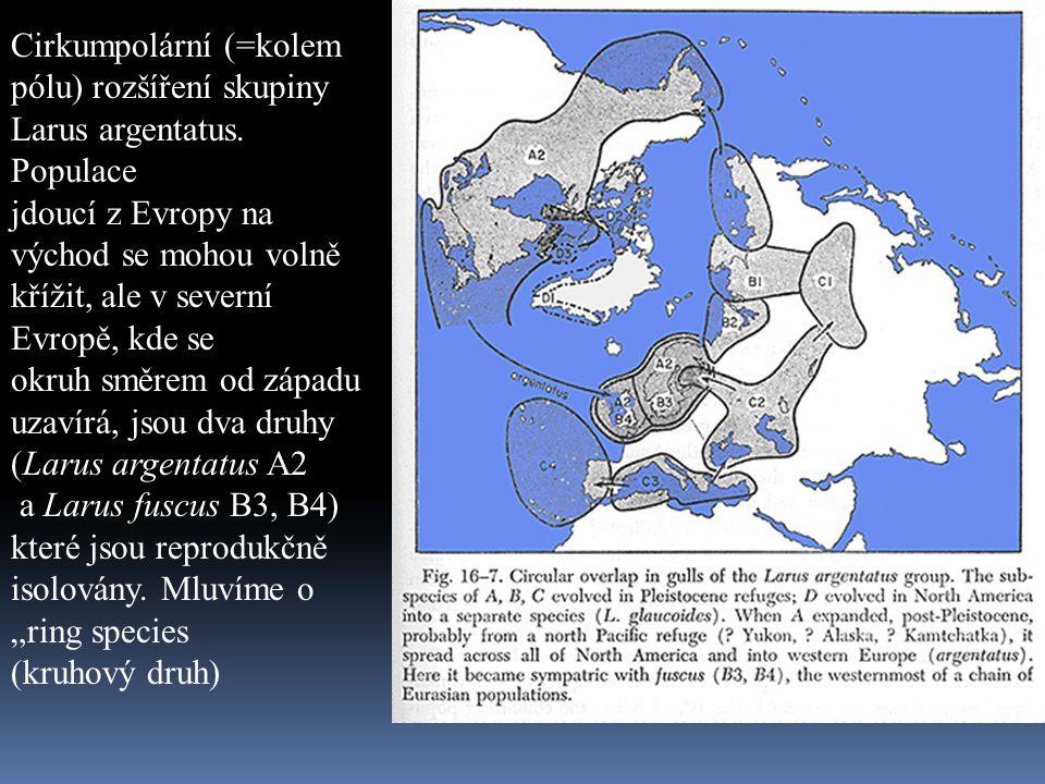 Cirkumpolární (=kolem pólu) rozšíření skupiny Larus argentatus