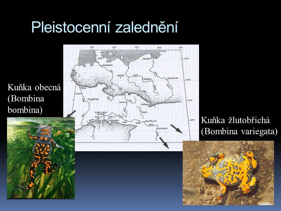 Pleistocenní zalednění