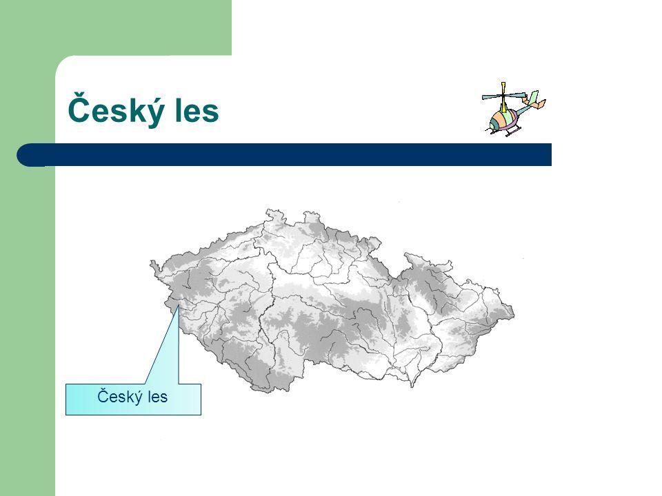 Český les Český les