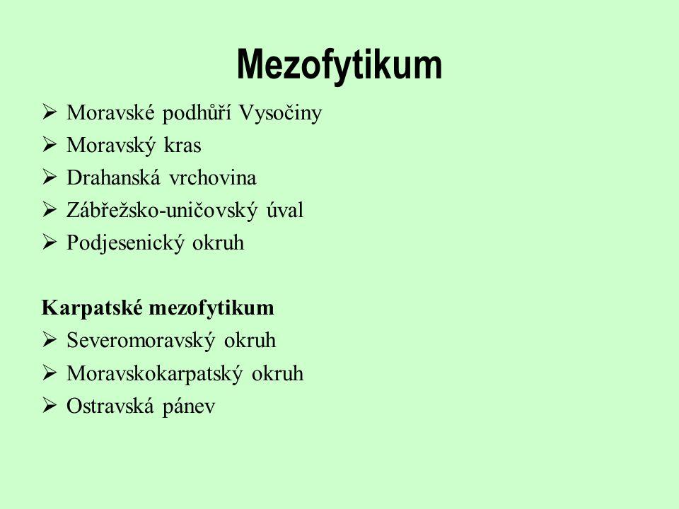 Mezofytikum Moravské podhůří Vysočiny Moravský kras