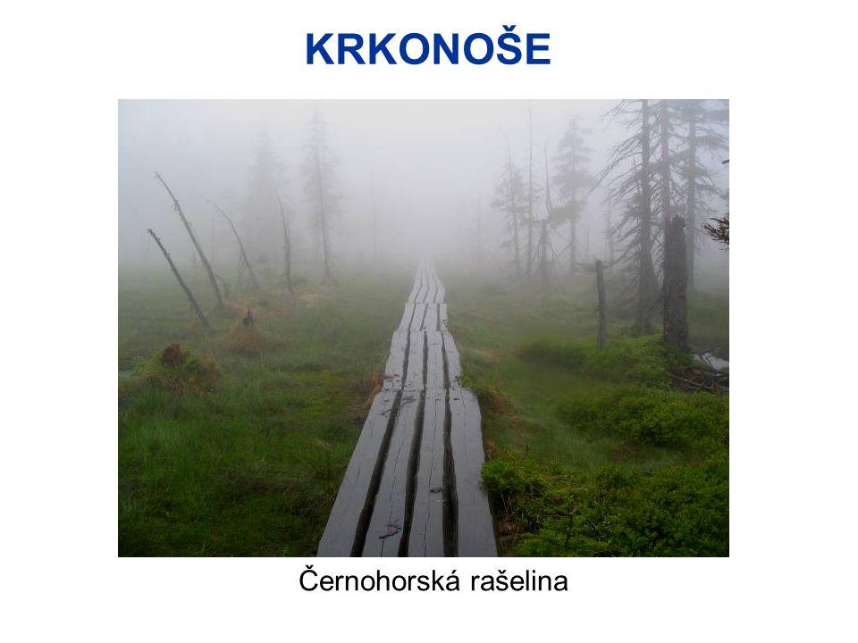 KRKONOŠE Černohorská rašelina