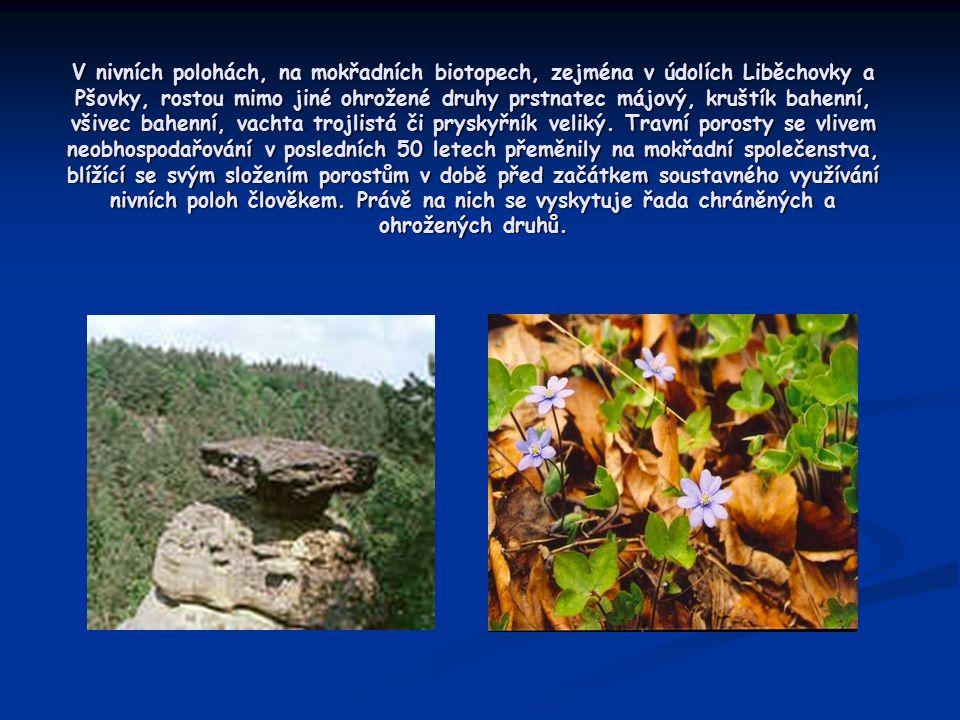 V nivních polohách, na mokřadních biotopech, zejména v údolích Liběchovky a Pšovky, rostou mimo jiné ohrožené druhy prstnatec májový, kruštík bahenní, všivec bahenní, vachta trojlistá či pryskyřník veliký.