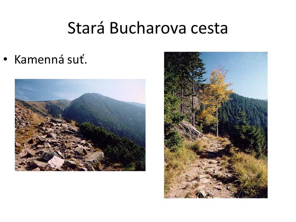 Stará Bucharova cesta Kamenná suť.