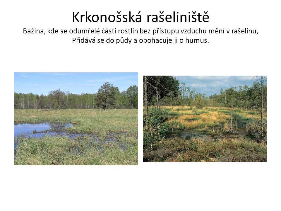 Krkonošská rašeliniště Bažina, kde se odumřelé části rostlin bez přístupu vzduchu mění v rašelinu, Přidává se do půdy a obohacuje ji o humus.
