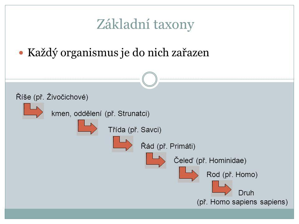Základní taxony Každý organismus je do nich zařazen