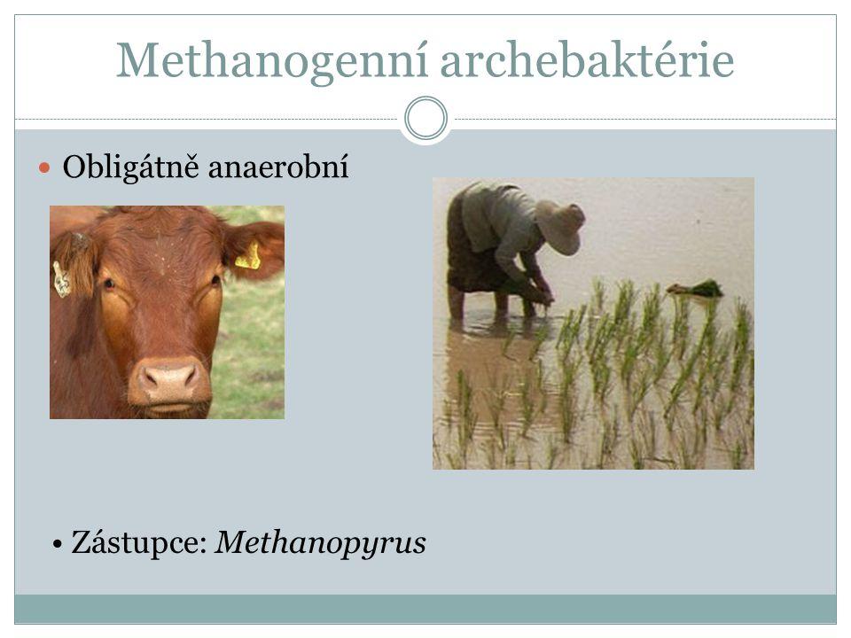 Methanogenní archebaktérie