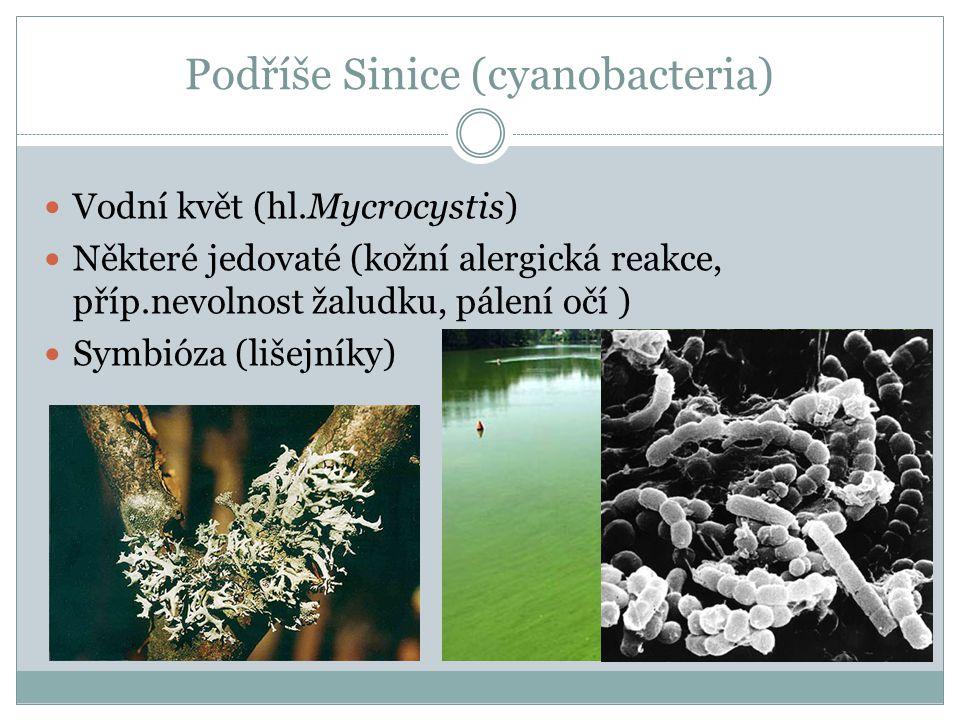 Podříše Sinice (cyanobacteria)