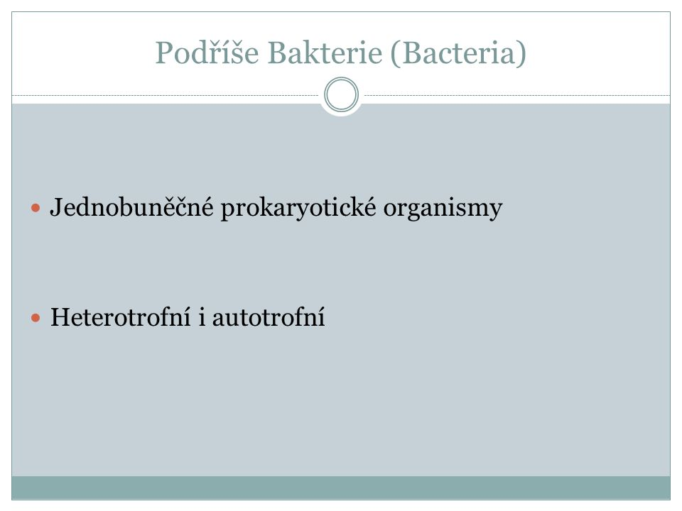 Podříše Bakterie (Bacteria)